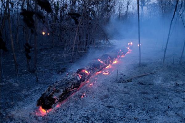 حريق غابات الامازون
